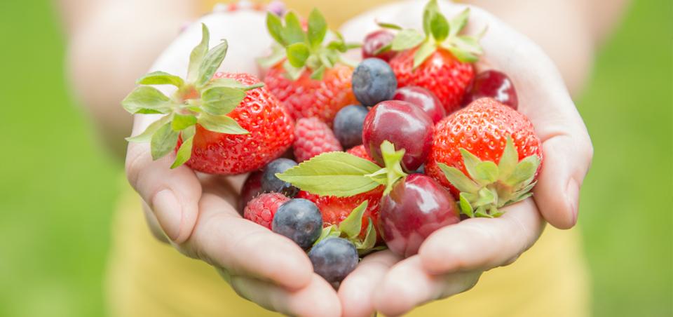 Nutrition Counseling – MySignatureNutrition